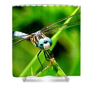 Dragonfly Close Up 2 Shower Curtain