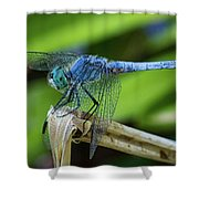 Dragonfly Color Shower Curtain