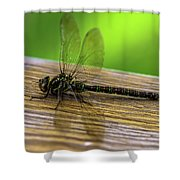 Dragonfly Colors Shower Curtain