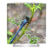 Dragonfly Delight Shower Curtain