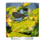 Dragonfly Dragonfly  Shower Curtain