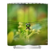 Dragonfly Dream In Green Shower Curtain