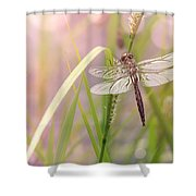 Dragonfly Dreams Shower Curtain