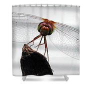Dragonfly Face Shower Curtain