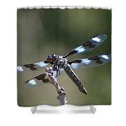 Dragonfly Hanging On  Shower Curtain
