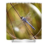 Dragonfly In A Bubble Shower Curtain
