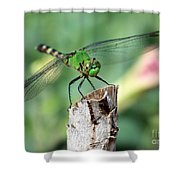 Dragonfly In The Flower Garden Shower Curtain