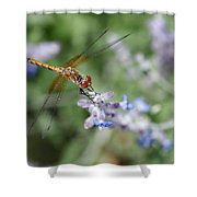 Dragonfly In The Lavender Garden Shower Curtain by Rona Black