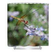 Dragonfly In The Lavender Garden Shower Curtain