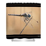 Dragonfly Needlepoint With Border Shower Curtain
