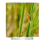 Dragonfly Nymph Shower Curtain
