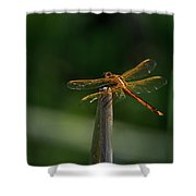 Dragonfly On A Twig Shower Curtain