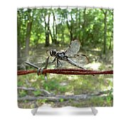 Dragonfly On Barbed Wire Shower Curtain