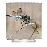 Dragonfly On Bent Reed Shower Curtain