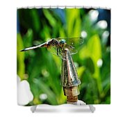 Dragonfly On Flag Post Shower Curtain