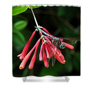 Dragonfly On Honeysuckle Shower Curtain