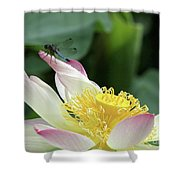 Dragonfly On Lotus Shower Curtain by Sabrina L Ryan