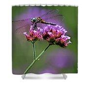 Dragonfly On Purple Verbena Shower Curtain
