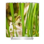 Dragonfly On Reed Leaf Shower Curtain