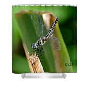 Dragonfly One Shower Curtain