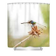 Dragonfly Perch Shower Curtain