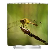 Dragonfly Perched Shower Curtain