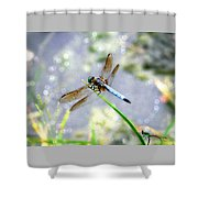 Dragonfly Portrait Shower Curtain