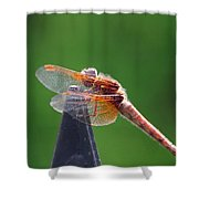 Dragonfly Red Shower Curtain