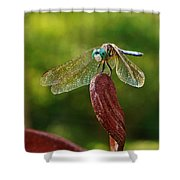Dragonfly Resting II Shower Curtain