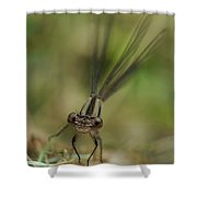 Dragonfly Up Close Shower Curtain