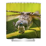 Dragonfly Wiping Its Eyes Shower Curtain