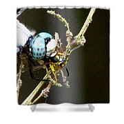 Dragonfly With Yellowjacket 2 Shower Curtain