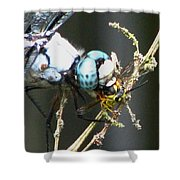 Dragonfly With Yellowjacket 3 Shower Curtain