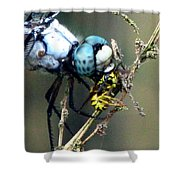 Dragonfly With Yellowjacket 5 Shower Curtain