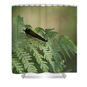 Dragonfly4 Shower Curtain