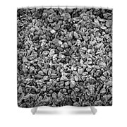 Dramatic Black And White Petals On Stones Shower Curtain