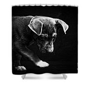 Dramatic Black And White Puppy Dog Shower Curtain