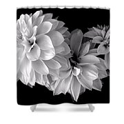 Dramatic Dahlias Shower Curtain