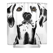 Drawing Of A Dalmatian Dog Shower Curtain