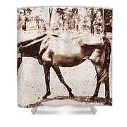Drawn Ranch Horse Shower Curtain