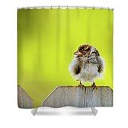 Dream Sparrow Shower Curtain
