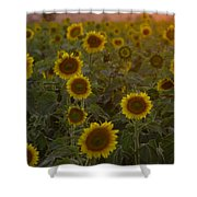 Dreaming In Sunflowers Shower Curtain
