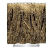 Dreaming Of Cattails Shower Curtain