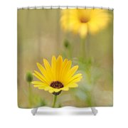 Dreaming Of Lemon Symphony 2 Shower Curtain