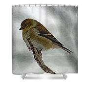 Dreaming Of Spring - American Goldfinch Shower Curtain