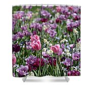 Dreaming Of Tulips Shower Curtain