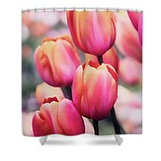 Dreaming Tulips Shower Curtain
