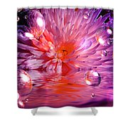 Dreams 3 Chrysanthemum Shower Curtain