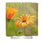 Dreams Of Orange Symphony In Spring 2 Shower Curtain