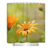 Dreams Of Orange Symphony In Spring  Shower Curtain
